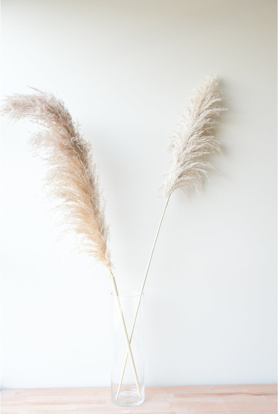 Large Natural Pampas Grass - 10 Stems/Bunch