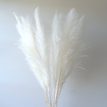 Large Bleached White Pampas Grass - 10 Stems / Bunch