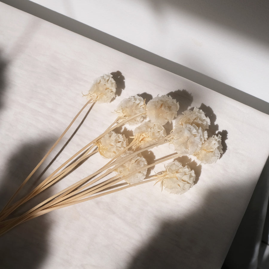 Bleached Dried Scabiosa Pods