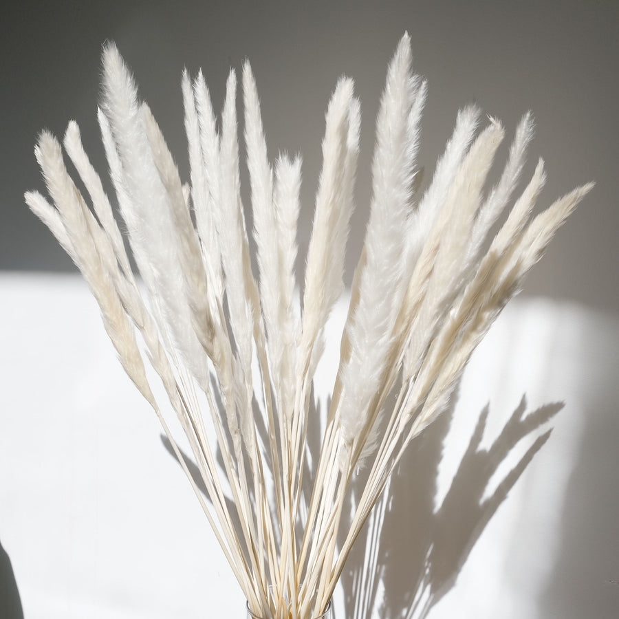 Bleached Mini Pampas Grass