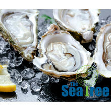 Load image into Gallery viewer, Champagne & Oysters