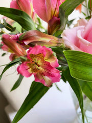 A close up image of a pink alstroemeria flower. A pink rose can also be seen in the background.