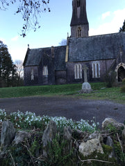 Snowdrops growing on top of a stone wall in front of a church.