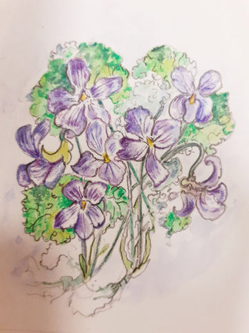 Drawing of violet flowers and leaves