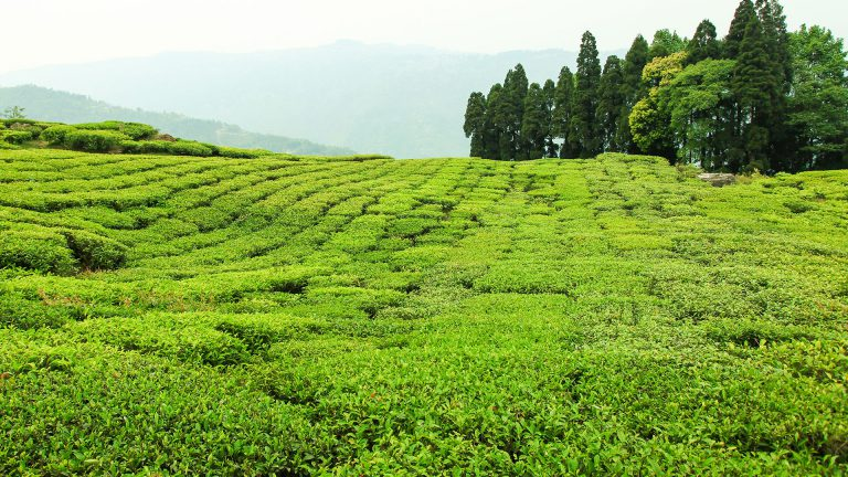Darjeeling - Travel Destination in India - Awesome Men