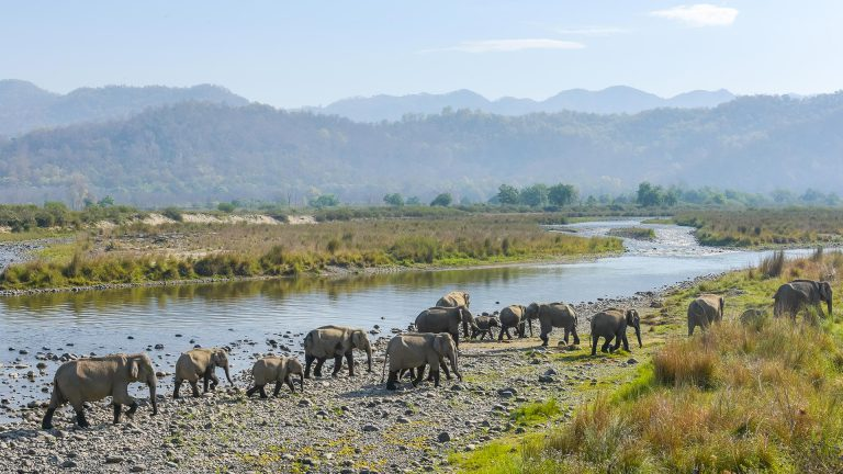 Jim Corbett National Park - Adventure Travel places
