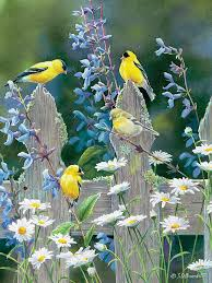 Goldfinch Quartet 500 pc