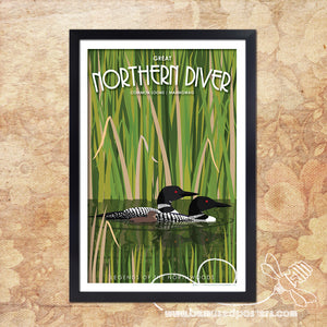 Loons - Great Northern Diver