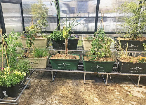 1900 Tiered Galvanised Stand - Sproutwell Greenhouses