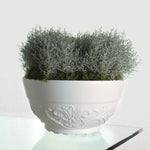 Senna Decorative Pot