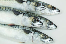 Load image into Gallery viewer, Fresh mackerel x 5