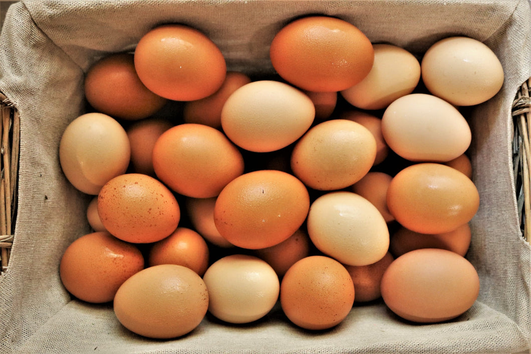 Large Egg Carton