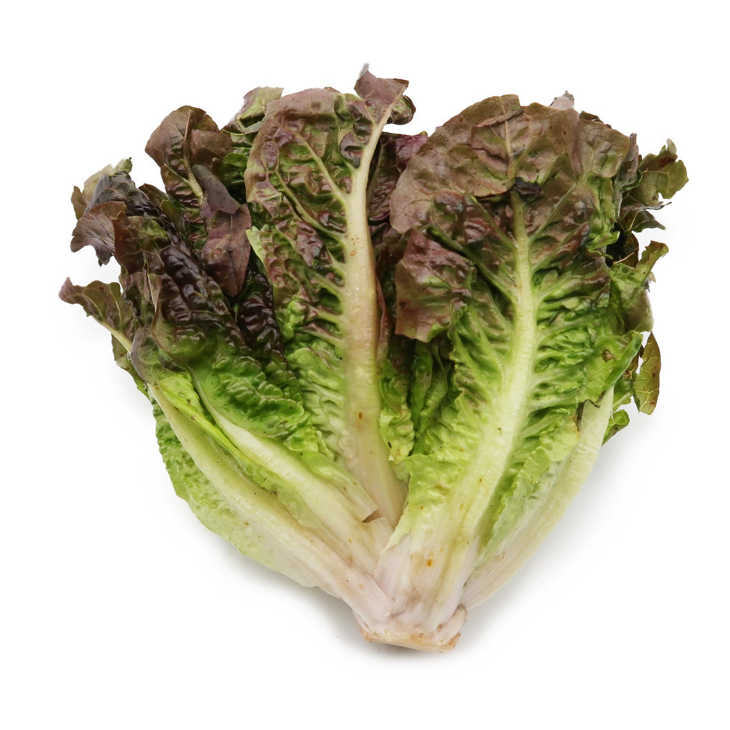 Red Butterhead Lettuce (Organically Farmed) 200g