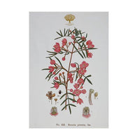 Maxwell & Williams Royal Botanic Gardens Victoria - Botanic Tea Towel