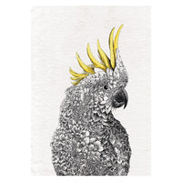 Maxwell & Williams Marini Ferlazzo Tea Towel Collection - Birds of Australia