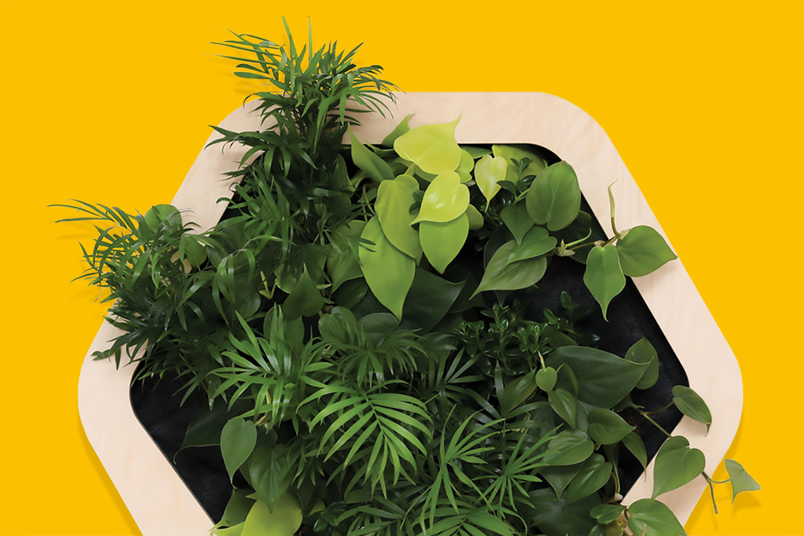 Gromeo A Self Watering Living Wall For Homes Small Spaces
