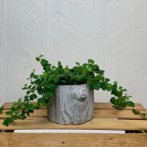 Tree Oval Cement Planter