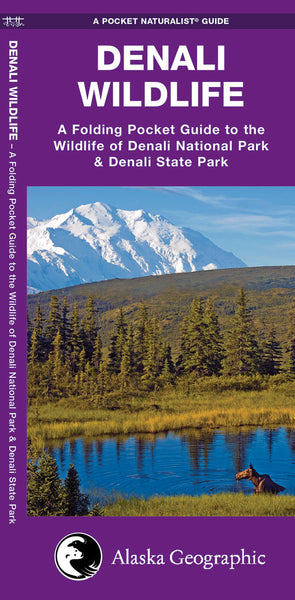 Denali Wildlife