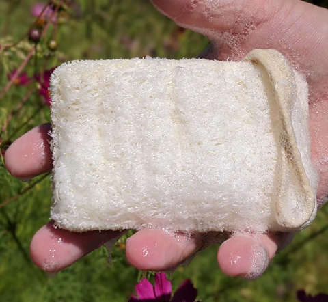 Eco-Friendly Sponge