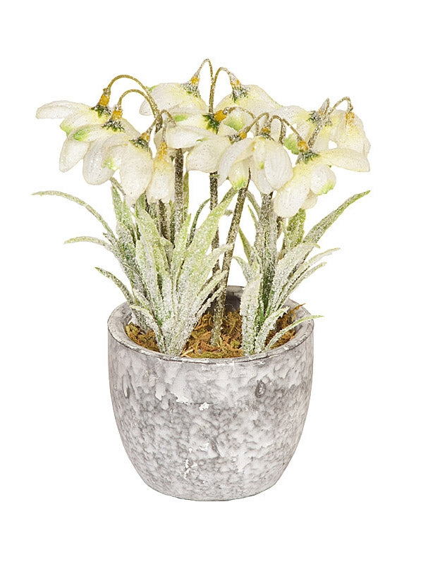 18cm Frosted Snowdrop in Pot