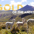 5 Reasons Why Alpaca Wool Is The 'Gold Of The Andes'