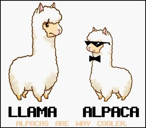 Alpaca Top 10 - Differences Between Alpacas and Llamas