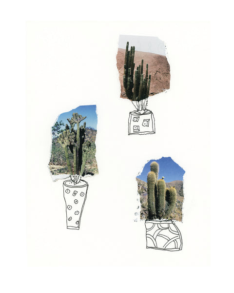 3 Cacti Limited Edition Print