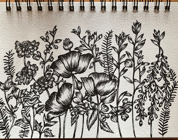 Sketch of Poppies, butterfly blue flowers, catmint, vetches and fern.