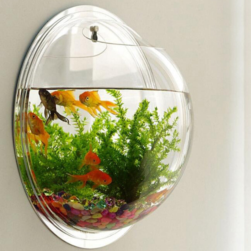 Wall Mounted Orb Aquarium