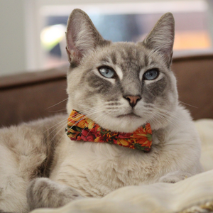 Cat Collar And Bow Tie