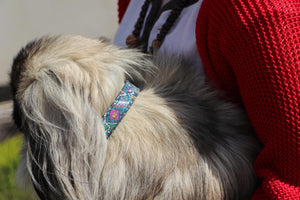 Casablanca Dog Collar