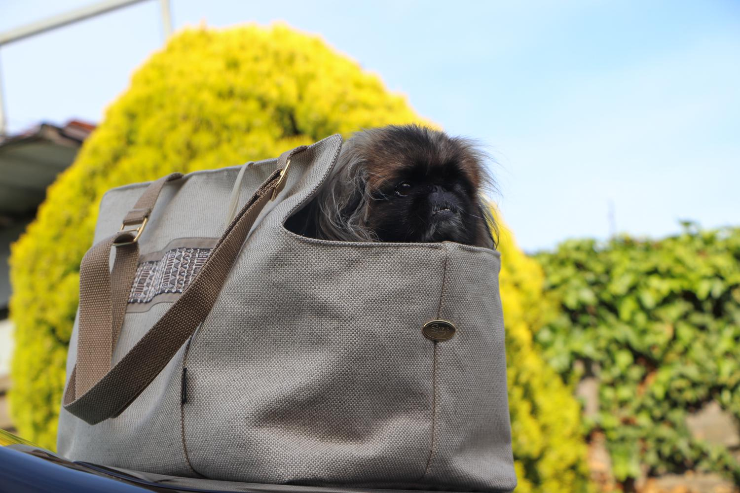 Essence Pick&Sleep summer dog carrier