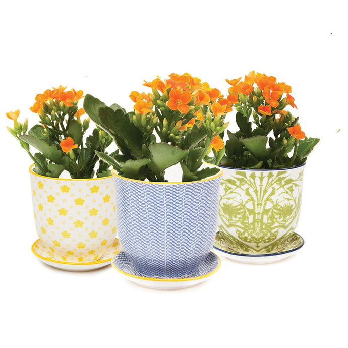 Petite Flower Pot and Saucer