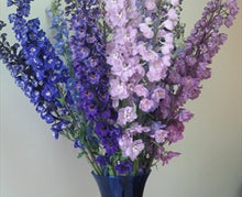 Load image into Gallery viewer, Delphinium Assorted