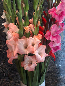 Gladiolas 25 bunch pack