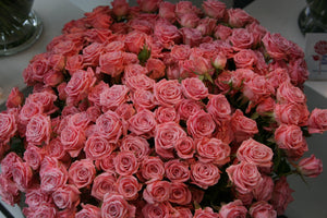 Roses Spray (Mini) Assorted