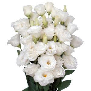 Lisianthus Assorted 400 Gram
