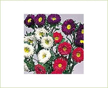 Load image into Gallery viewer, Aster Matsumoto Assorted
