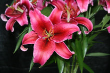 Load image into Gallery viewer, Lilies Oriental