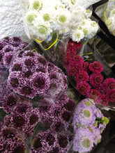 Load image into Gallery viewer, Scabiosa Assorted
