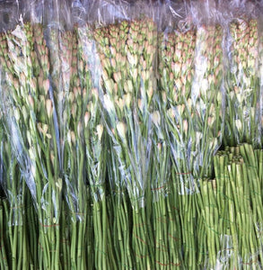 Tuberose in 15 bunches per wet pack