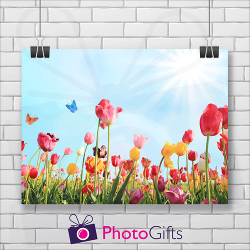 Landscape picture of a field of tulips in pinks, reds and yellows with butterflies flying around and a pale blue sky with the sun in the top right hand corner. The picture is hanging by two metal clips on a background of a white painted brick wall. As produced by Photogifts.co.uk