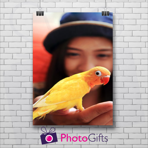 White painted brick wall with a portrait picture of a  girl in a blue hat with a yellow parrot in her hand and the Photogifts logo at the bottom as produced by Photogifts.co.uk