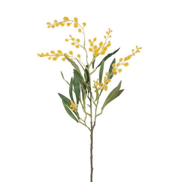 Wattle. Yellow. Single Stem. 78cm