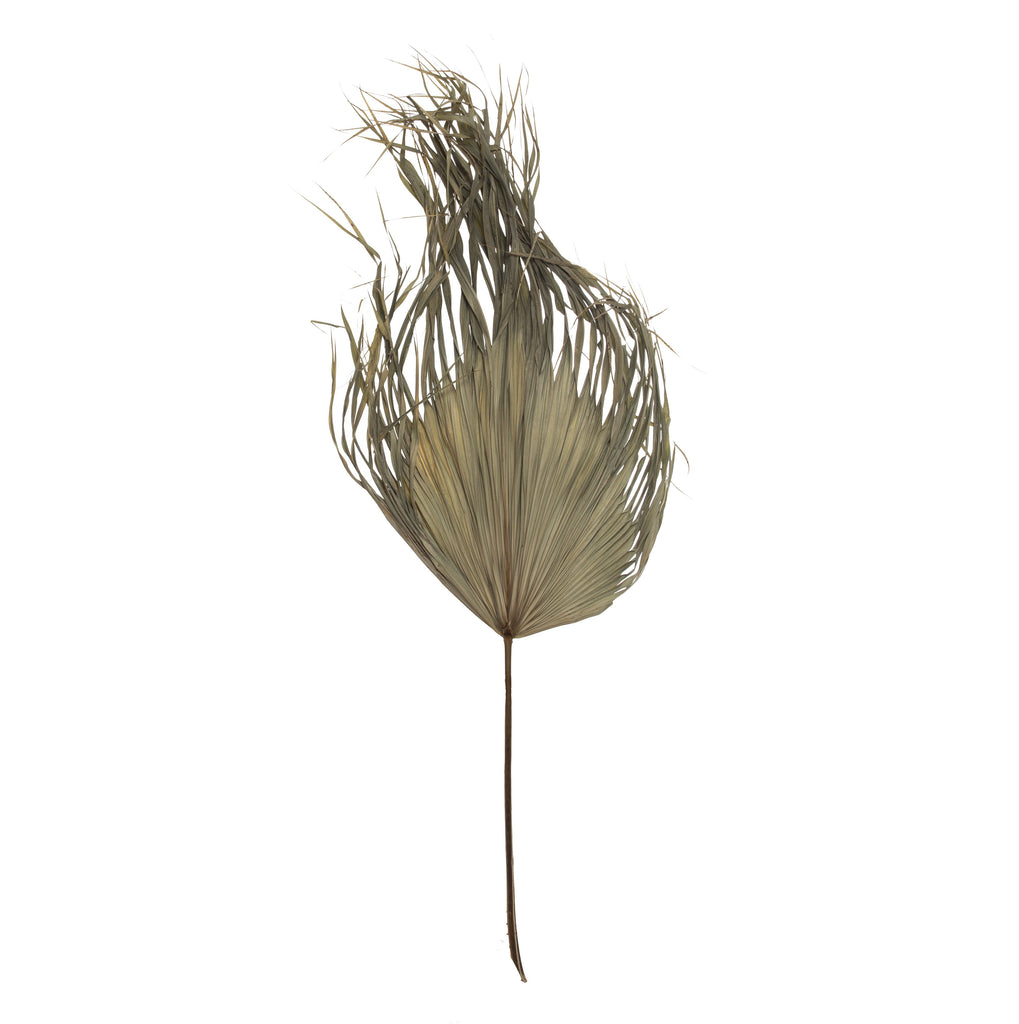 Dried Fan Palm Stem 130cm Natural
