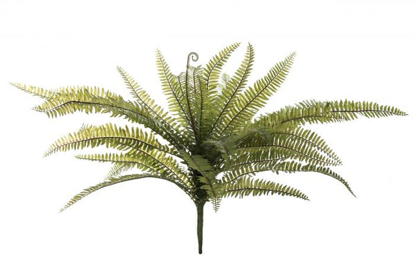 Boston Fern 65x65x60cm