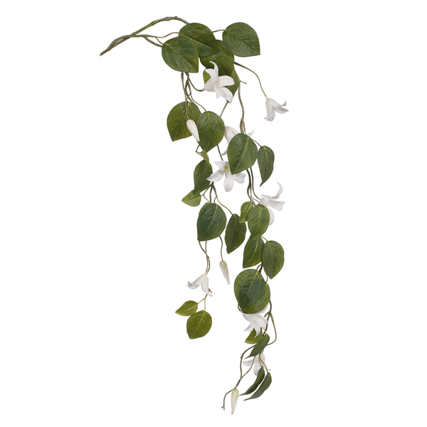 Clematis Hanging Stem. Single. White. 134cm