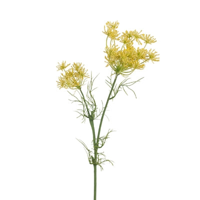 Queen Annes Lace. Yellow 66cm