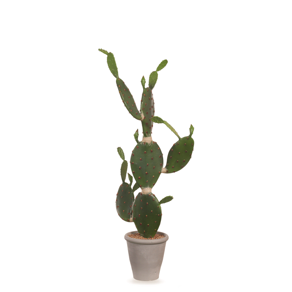 Cactus Prickly Pear in Pot Green 114cm