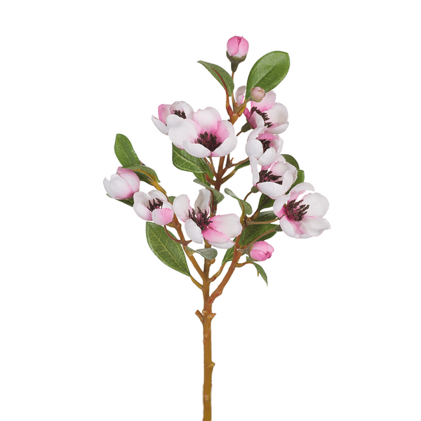 Branch Apple Blossom